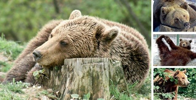 bear-header-image